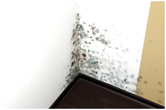 How to prevent mold - Photo taken by Patrick Belhon all rights reserved 2014